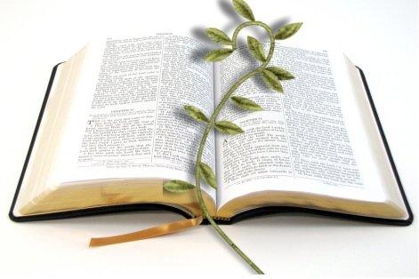 biblevine